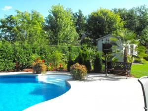 Expression-tropicale-palmier-piscine