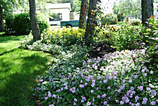 Romantiques ombrages du jardin dans ma vie for Amenagement jardin ombre
