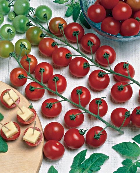 Tomate cerise du jardin dans ma vie - Comment congeler des tomates du jardin ...
