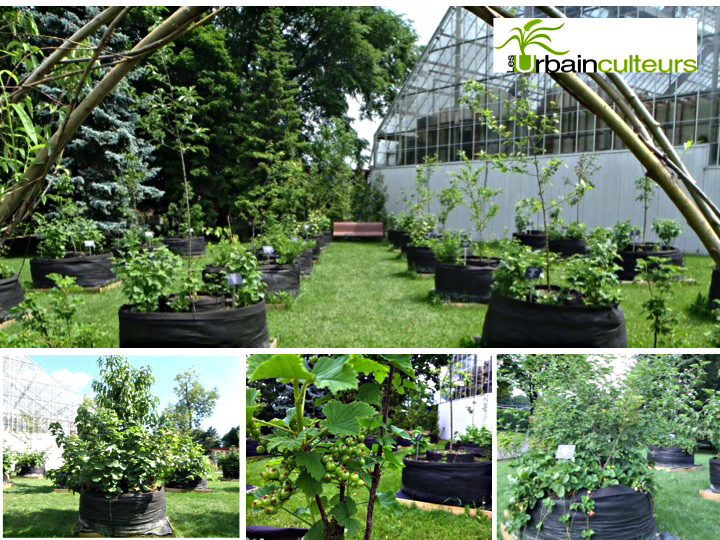 Urbainculteurs fruitiers for Amenagement jardin fruitier