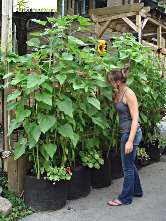 Écran végétal - Du jardin dans ma vie