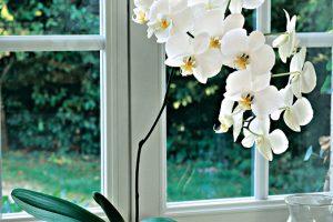 Orchidee papillon