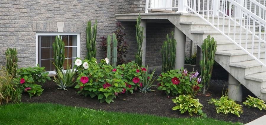 Une plate-bande exotique - Du jardin dans ma vie