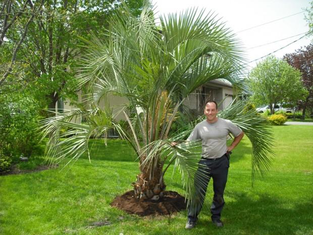 des palmiers pour le qu bec du jardin dans ma vie. Black Bedroom Furniture Sets. Home Design Ideas