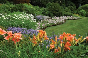 Maison-fleurs-vivaces-vedettes-jardin