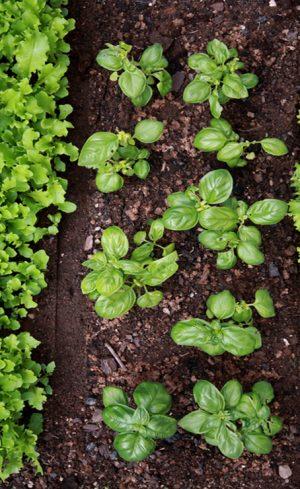 10 légumes faciles à cultiver