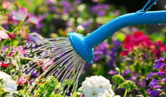 Des accessoires pour que vos plantes ne manquent pas d'eau