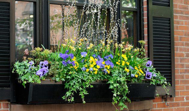 Idées inspirantes pour les boîtes à fleurs