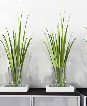 5 plantes d'intérieur qui ont du style