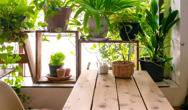 Quand doit-on rempoter les plantes d'intérieur?