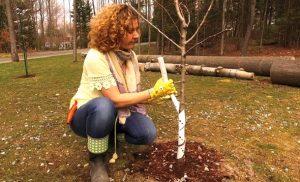 5 erreurs à éviter ce printemps au jardin