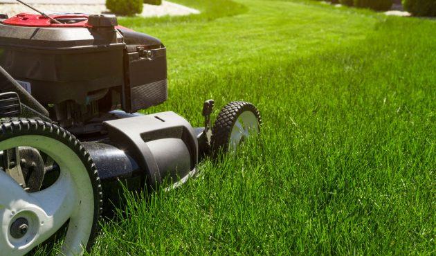 Entretien de la pelouse au printemps