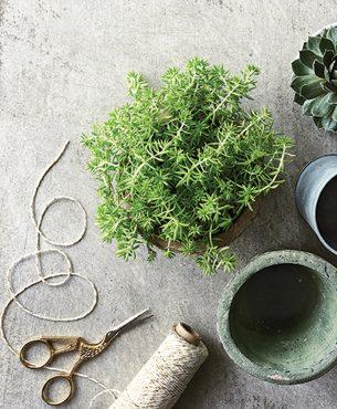 Offrez une plante en cadeau
