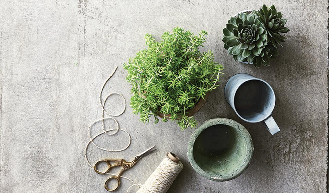 offrez une plante en cadeau du jardin dans ma vie. Black Bedroom Furniture Sets. Home Design Ideas