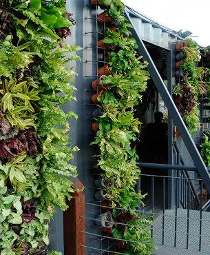 À la verticale : jardiner autrement