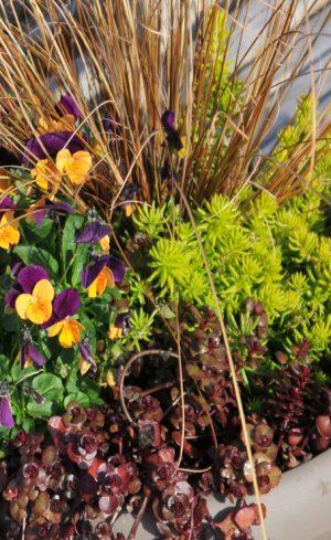 3 arrangements en pot à réaliser cet automne