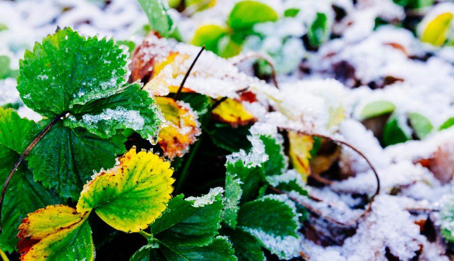 Protection des plantes en pot l'hiver