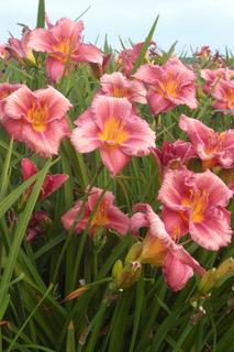 Plante facile au jardin