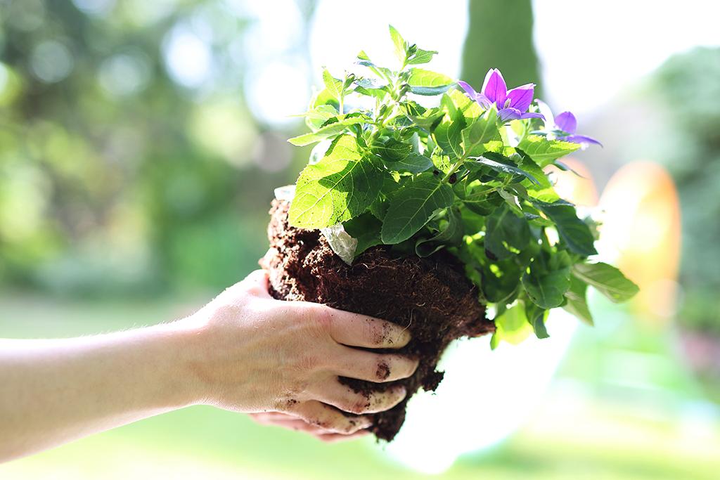 comment planter des plantes vivaces les tapes suivre. Black Bedroom Furniture Sets. Home Design Ideas