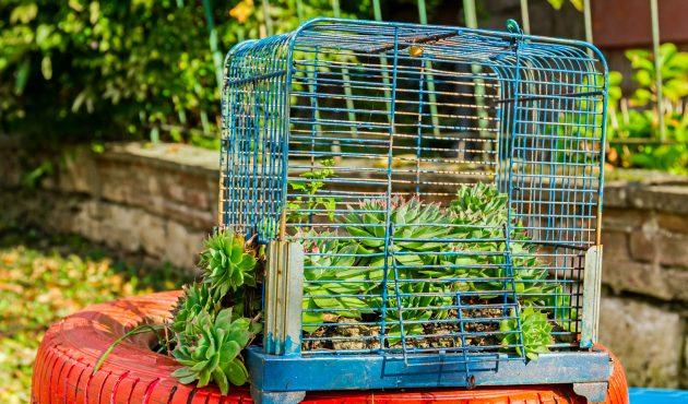 3 projets à réaliser avec des plantes succulentes