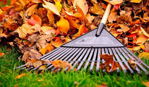 Comment entretenir votre pelouse à l'automne ?