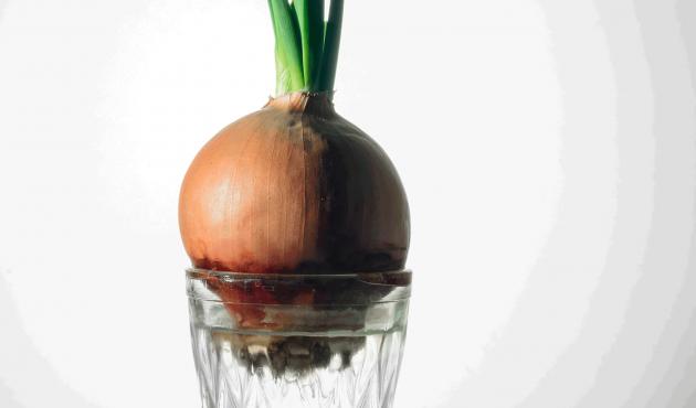 Faire repousser des légumes à l'inifini