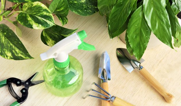 Fertiliser ses plantes d'interieur