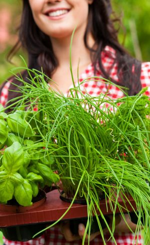 Top 10 des fines herbes annuelles et vivaces