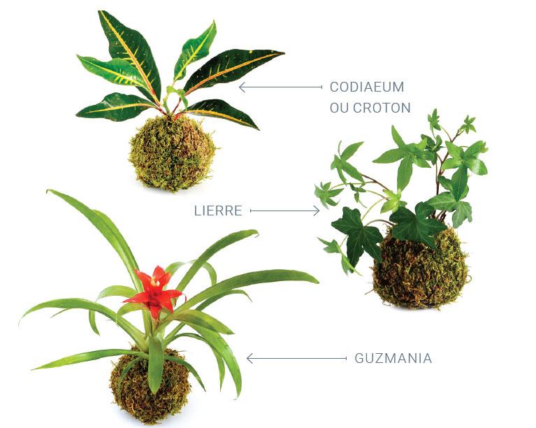 Plantes pour kokedama