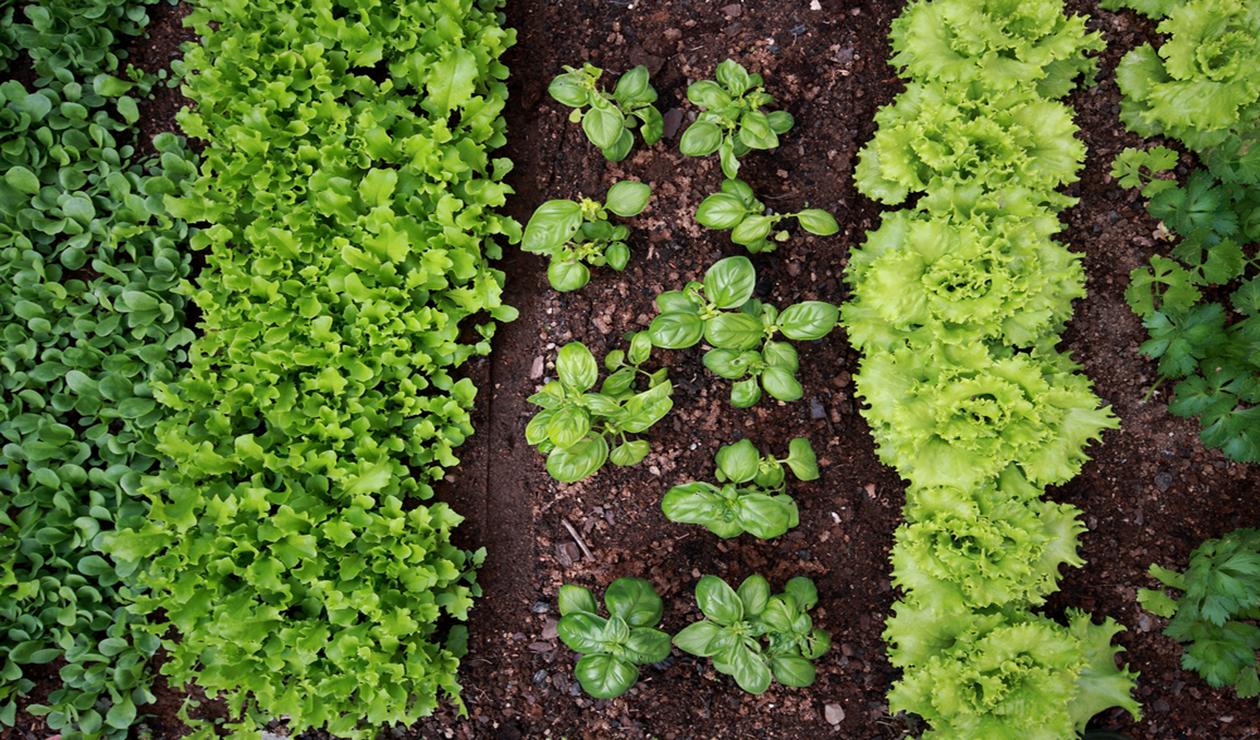 Faire Pousser Tomates En Pot 10 légumes faciles à cultiver – du jardin dans ma vie