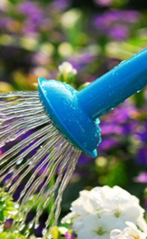 Trucs pour faciliter l'arrosage de vos plantes
