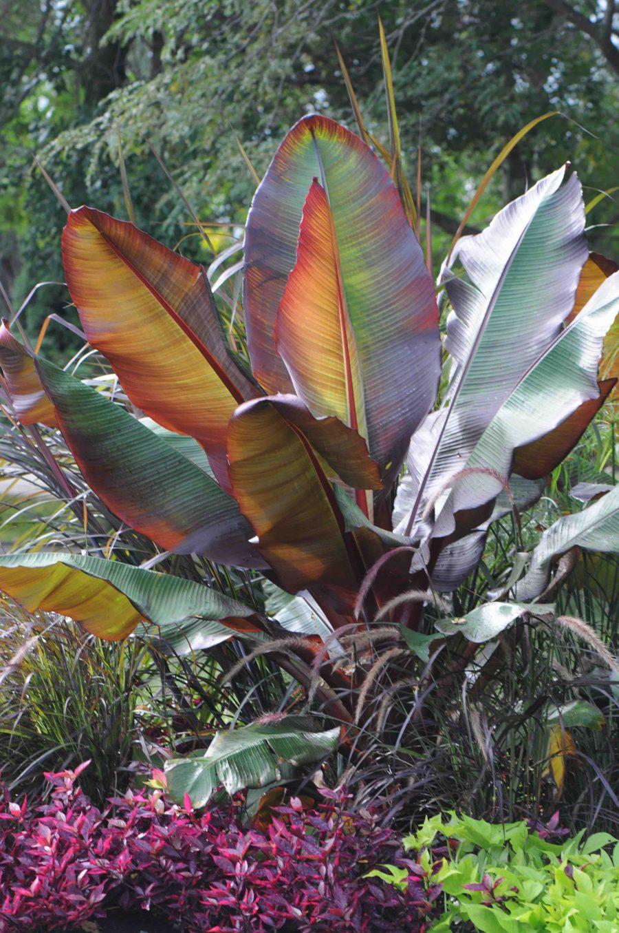 Plante Tropicale Exterieur