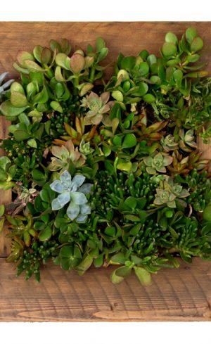Un cadre végétal en cinq étapes faciles