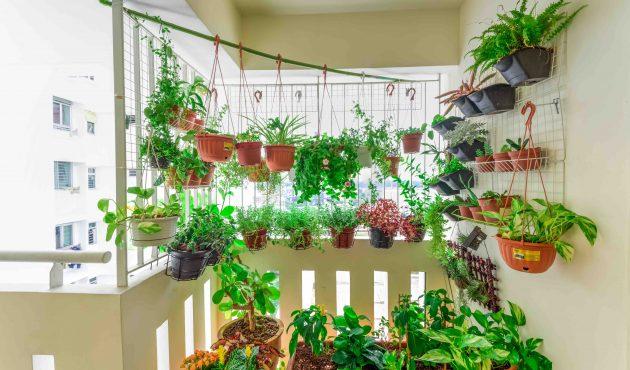 4 conseils pour cultiver des plantes sur un balcon