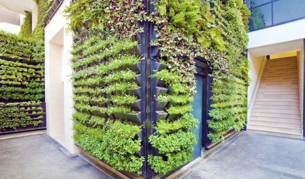 Quelques trucs pour bien réussir vos murs végétaux