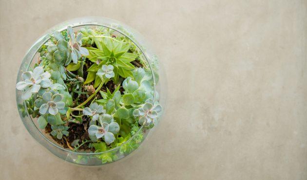 Créez votre terrarium étape par étape