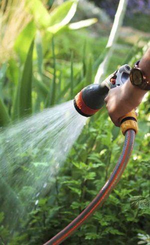 5 astuces pour économiser l'eau au jardin