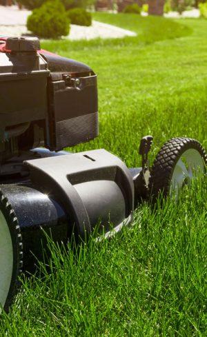 Comment prendre soin de sa pelouse, mois par mois