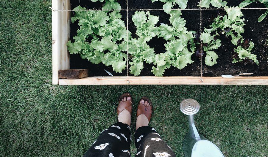 Quand jardiner devient th rapeutique du jardin dans ma vie - Quand mettre du fumier dans son jardin ...