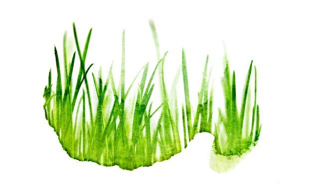 Sept vérités sur la pelouse