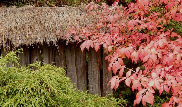 Trois végétaux coups de cœur pour l'automne