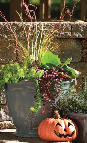 Des arrangements de plantes pour repousser l'hiver
