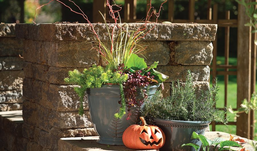 Arrangement automne