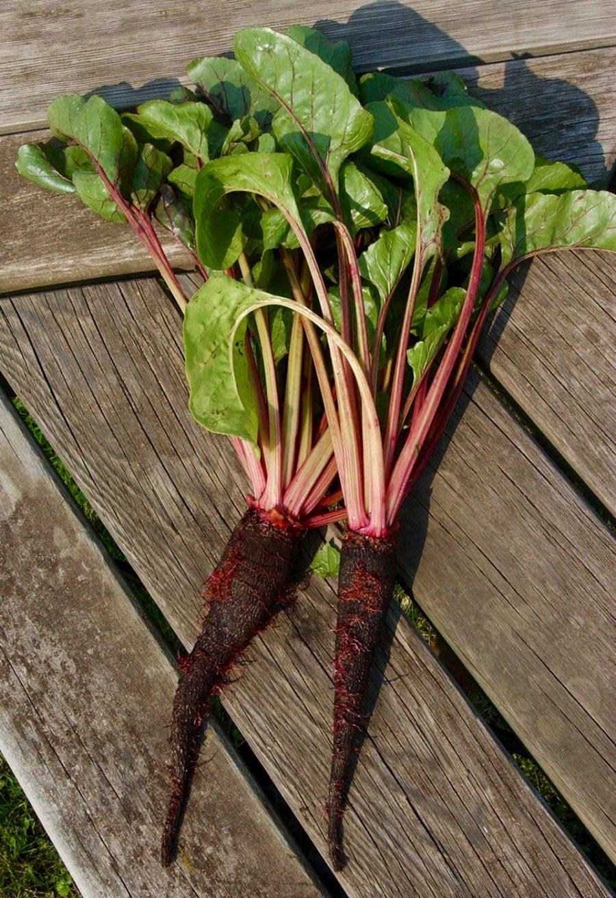Légumes anciens au jardin