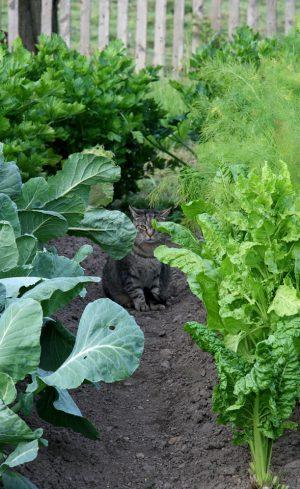 De bons compagnons assurent de bons légumes !
