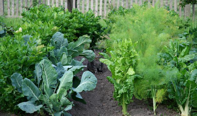 Compagnonnage au jardin