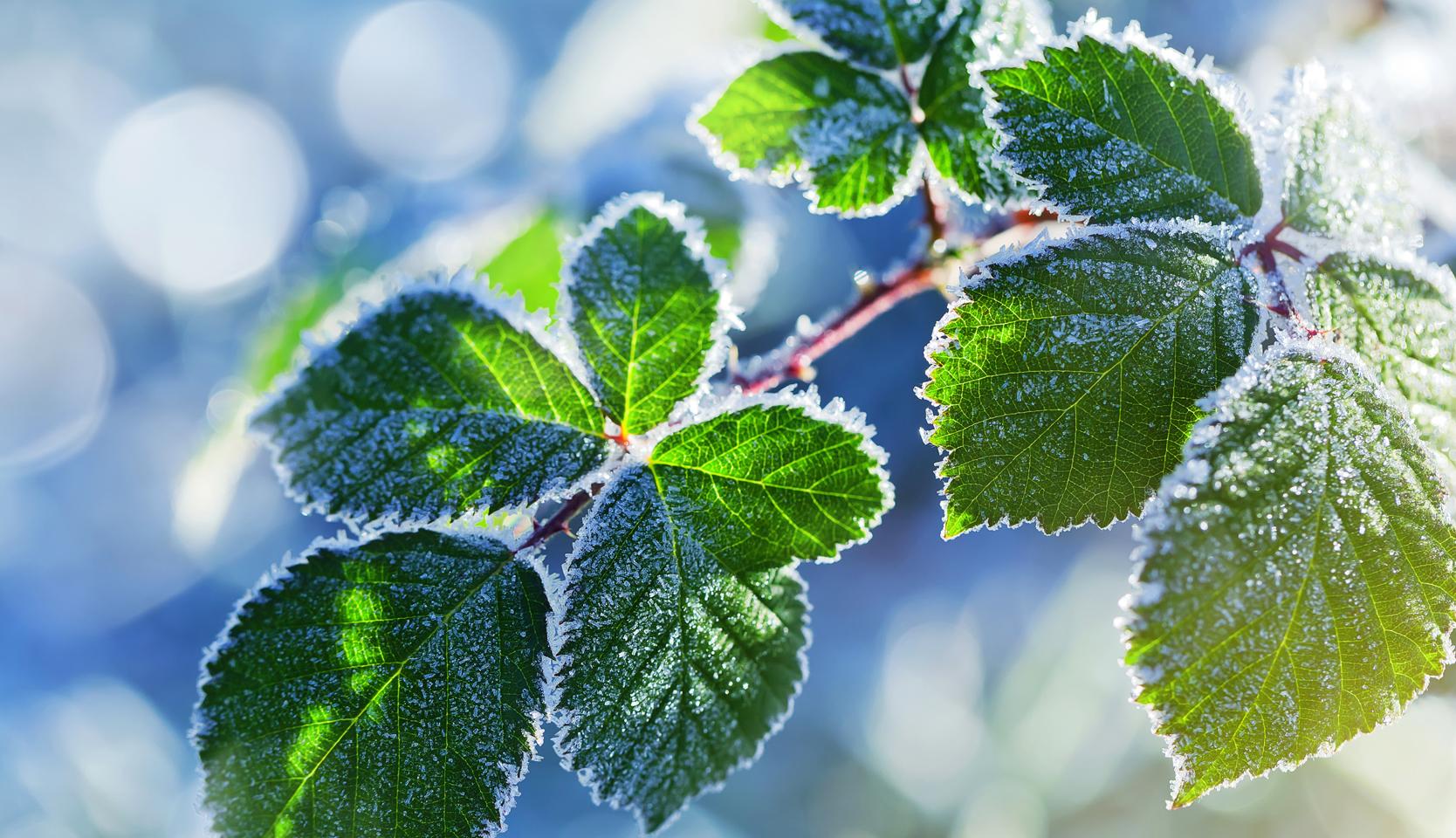 Arbre Fruitier En Pot Interieur arbustes fruitiers en pot : comment les protéger l'hiver