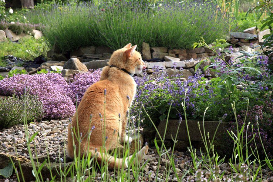 couvre-sols au jardin