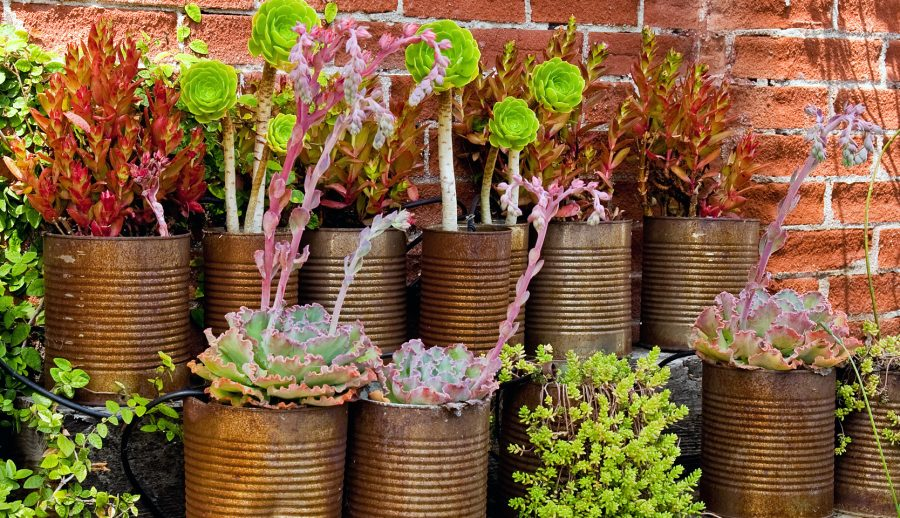 jardin cactus et succulentes