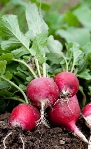 Quels légumes semer et quand